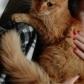 Annuncio: Bellissima micia rossa, 4 mesi cerca casa