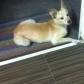 Annuncio: Cucciola meticcia cerca casa
