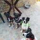 Annuncio: Cuccioli in adozione
