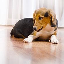 Notizie dal blog: Vivere con un cane in casa