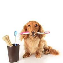 Notizie dal blog: Come curare i denti dei nostri pet