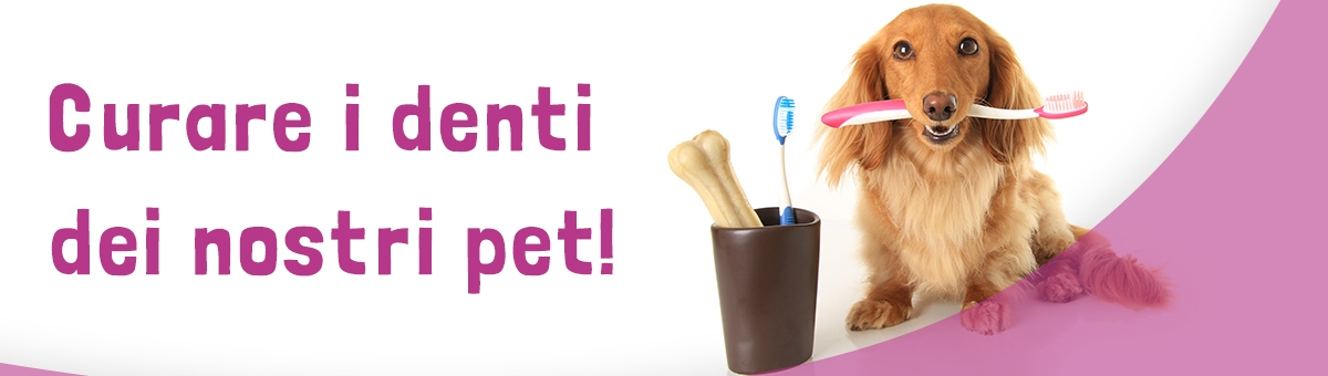 Come curare i denti dei nostri pet
