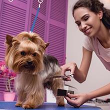 Notizie dal blog: Toelettatura: un momento di relax per i nostri pet
