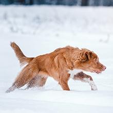 Notizie dal blog: Animali ed inverno: come affrontarlo!