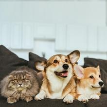 Notizie dal blog: Tutti i benefici di accogliere un amico peloso in casa