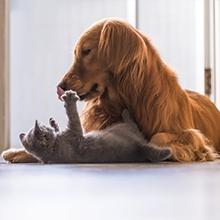 Notizie dal blog: Consigli per una buona convivenza tra cane e gatto