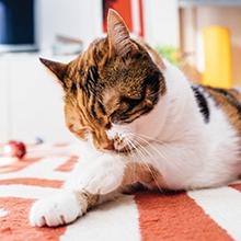 Notizie dal blog: Cura del gatto