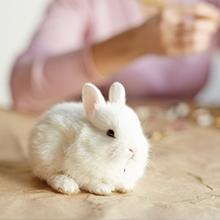 Notizie dal blog: Il coniglio nano