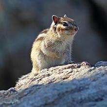 Notizie dal blog: Lo scoiattolo