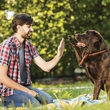 Notizie dal blog: I comportamenti del tuo pet