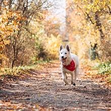 Notizie dal blog: Amici animali e cambio di stagione