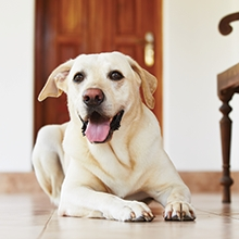 Notizie dal blog: Sei costretto a lasciare solo il tuo pet? Ecco i consigli