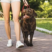 Notizie dal blog: Come educare il proprio pet a fare i bisognini fuori casa