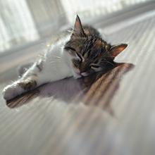 Notizie dal blog: Proteggere i pet con l'arrivo dell'estate