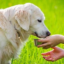 Notizie dal blog: L'alimentazione dei nostri amici pet in estate