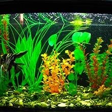 Notizie dal blog: Manutenzione dell'acquario nel periodo estivo