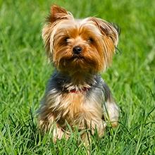 Notizie dal blog: L'importanza di non rasare i pet in estate