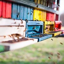 Notizie dal blog: Le api: piccole alleate per la nostra salvezza