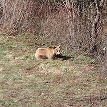Notizie dal blog: Le specie in via di estinzione: piccoli gesti per la loro salvaguardia