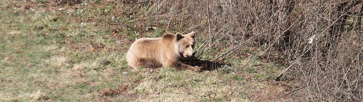 Le specie in via di estinzione: piccoli gesti per la loro salvaguardia