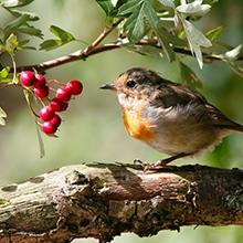 Notizie dal blog: Il linguaggio degli uccelli