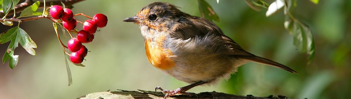 Il linguaggio degli uccelli