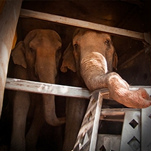 Notizie dal blog: Basta animali nel circo!