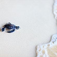 Notizie dal blog: Le tartarughe marine: una specie in via d'estinzione