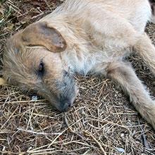 Notizie dal blog: Cosa fare se si incontra un animale in difficoltà