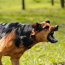 Notizie dal blog: L'assicurazione sugli animali? Facciamo chiarezza