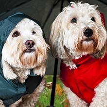 Notizie dal blog: L'abbigliamento per il tuo cane, perché sceglierlo!