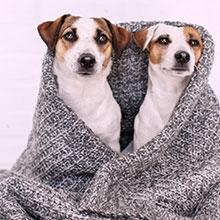 Notizie dal blog: Come gestire i nostri amici pet in inverno