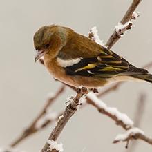 Notizie dal blog: Come proteggere gli uccelli in inverno