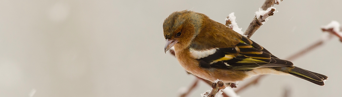 Come proteggere gli uccelli in inverno