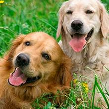 Notizie dal blog: Clonazione cani e gatti: pro o contro?