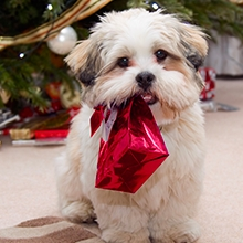 Notizie dal blog: I regali di Natale per i nostri amici pelosi