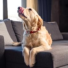 Notizie dal blog: Vademecum per vivere in casa con un pet