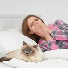Notizie dal blog: L'allergia al pelo di cane e gatto: tutto ciò che devi sapere