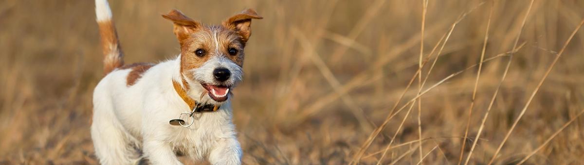 I 5 buoni proposti per il 2020 con il tuo pet