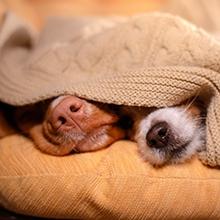 Notizie dal blog: Quanto dormono i nostri pet in inverno