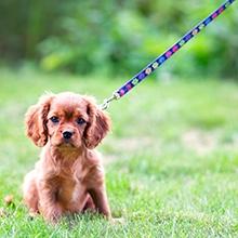 Notizie dal blog: Le regole per educare un cucciolo