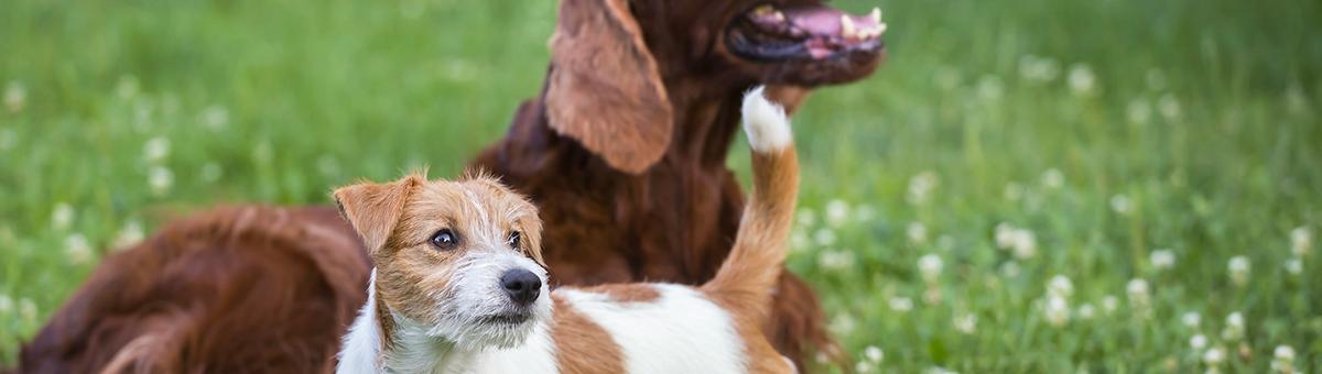 Socializzazione del cucciolo di cane: consigli ed idee