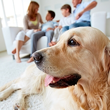 Notizie dal blog: Come affrontare la fase 2 con un pet