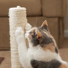 Notizie dal blog: Perchè il gatto si fa le unghie?