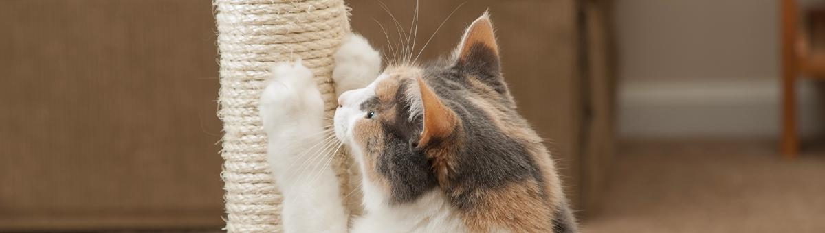 Perchè il gatto si fa le unghie?