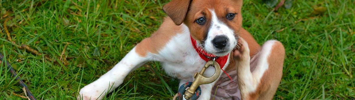 Come evitare che gli animali prendano i parassiti