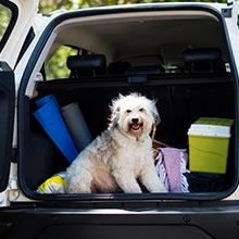 Notizie dal blog: Tutti i consigli per riprendere a viaggiare con i pet