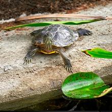Notizie dal blog: Come fanno le tartarughe a vivere così a lungo