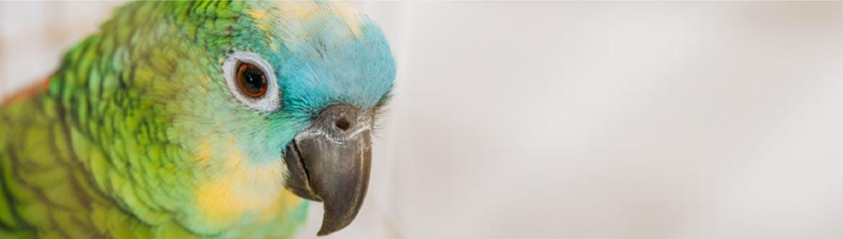 10 cose da non fare mai con i pappagalli.