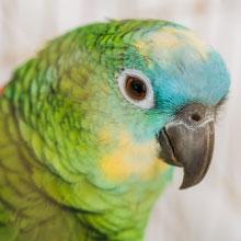 Notizie dal blog: 10 cose da non fare mai con i pappagalli.